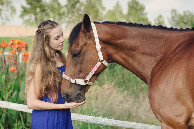 horse and rider-11