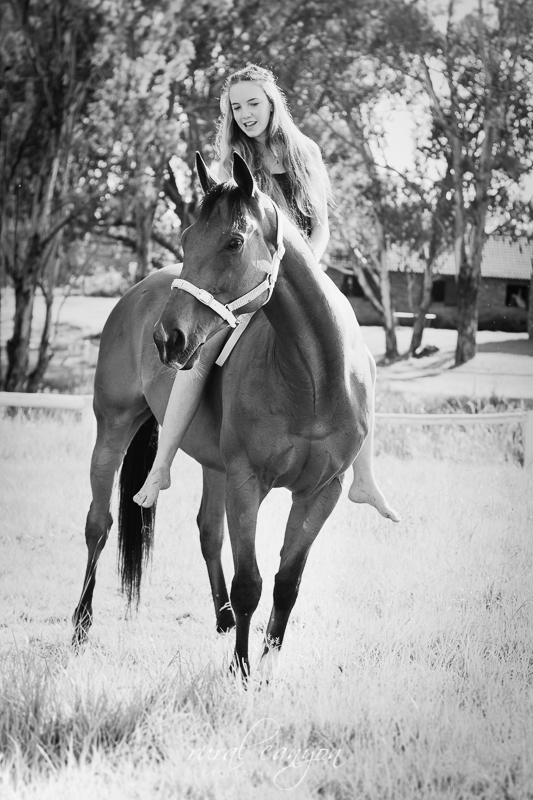 horse and rider-2