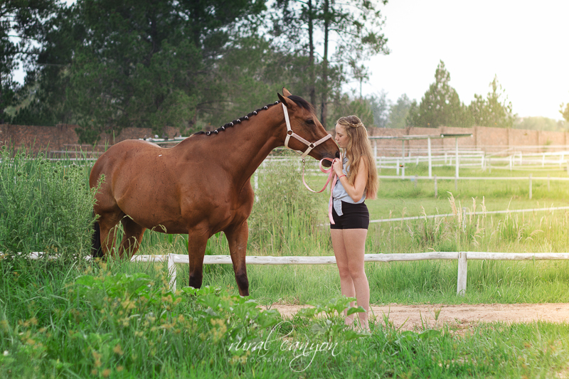 horse and rider-8