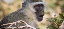 Kruger Park July 2015