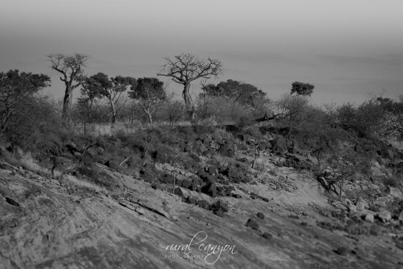 baobabs-7