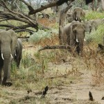 Mapungubwe elephants – Part 2