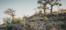 Mapungubwe landscapes