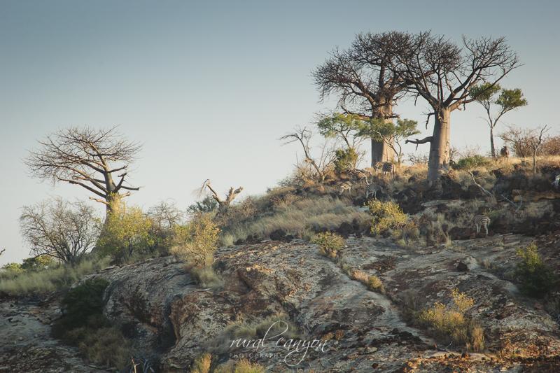 landscapes-21