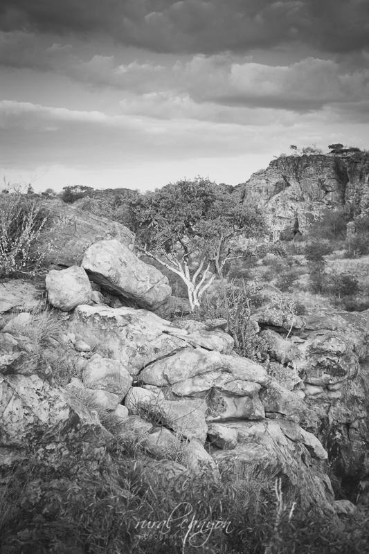 landscapes-9
