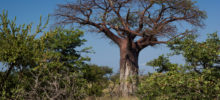 Landscapes of Mapungubwe