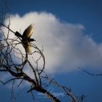 Mapungubwe – Birds