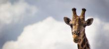 Mapungubwe – Animal life