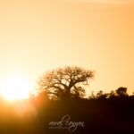 Mapungubwe – Sunrise and Sunset
