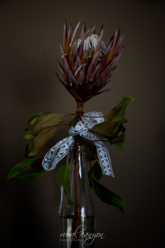 drying protea-7