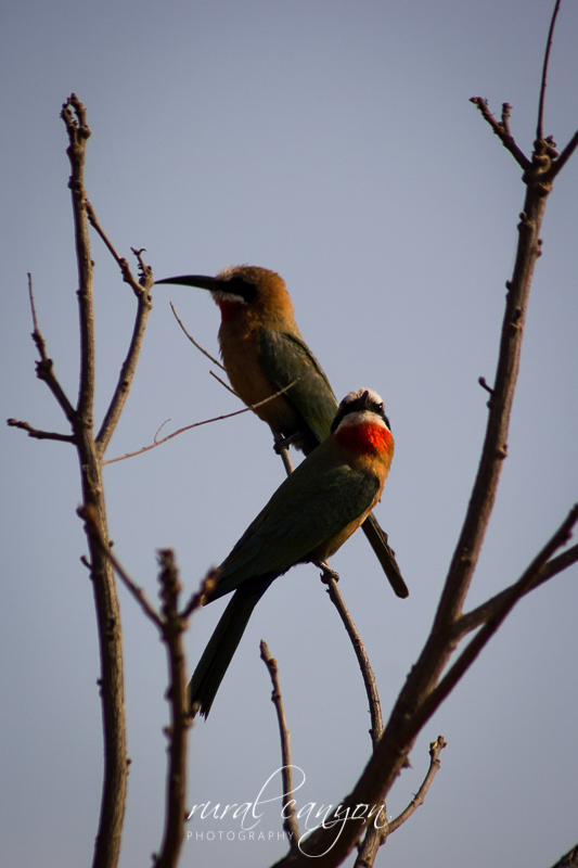 Birds-23