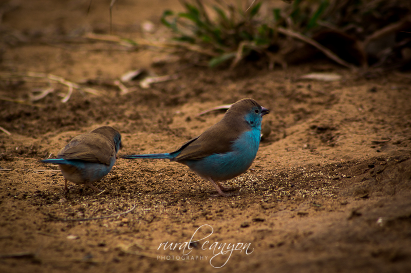 Birds-9