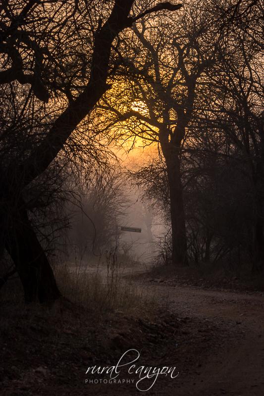 Sunrise in mist-4