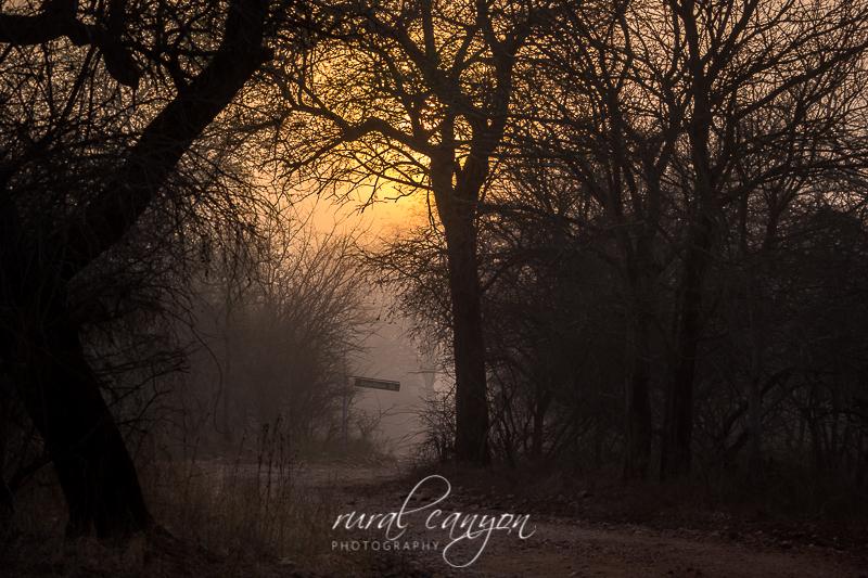 Sunrise in mist-5