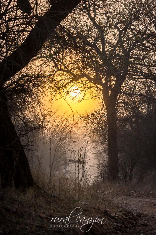 Sunrise in mist-6