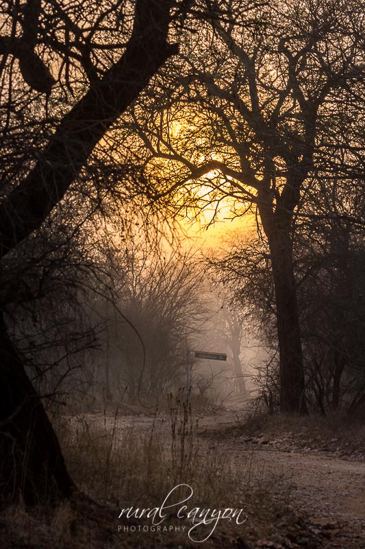 Sunrise in mist-7