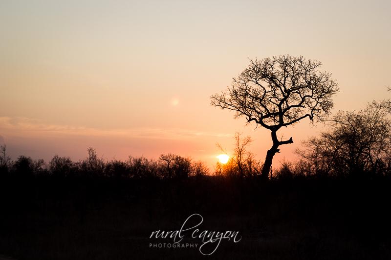 Sunset Kruger-2