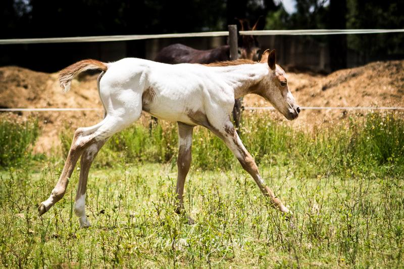 Foal-7