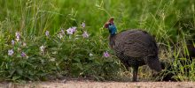 Birds of Kruger