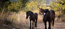 Stonehaven horses
