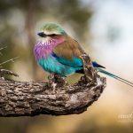 Birds of Stonehaven