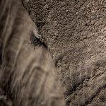 Wrinkles and details – ellies