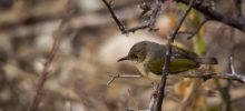 Birdlife Mapungubwe