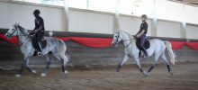 Students and young stallion practice – Lipizzaners